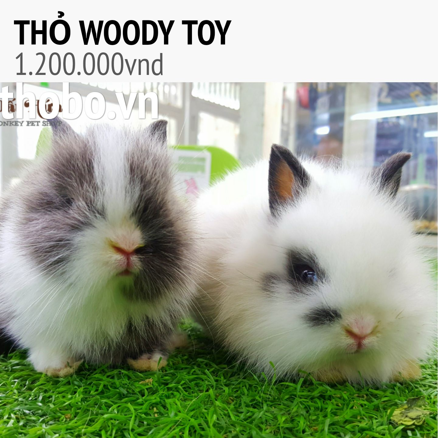 thỏ woody toy baby